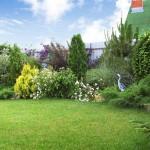 Зелёный оазис у дома (5)