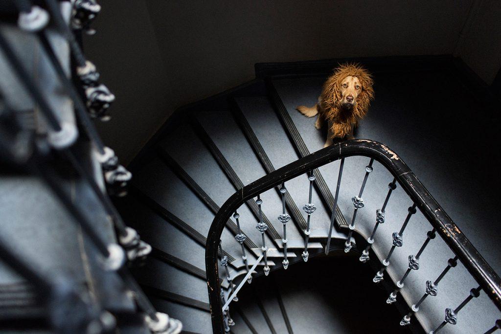 Как сделать из собаки льва (11)