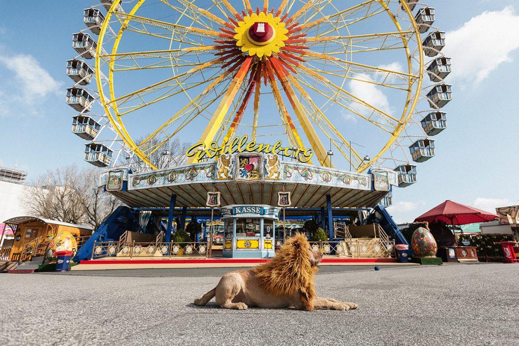 Как сделать из собаки льва (5)