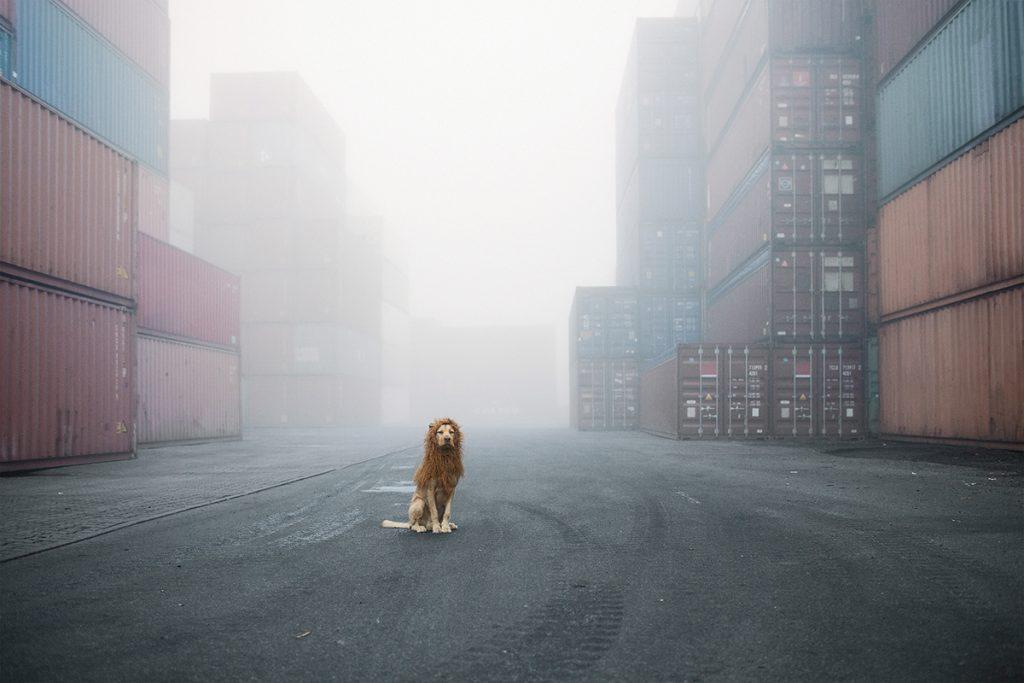Как сделать из собаки льва (8)